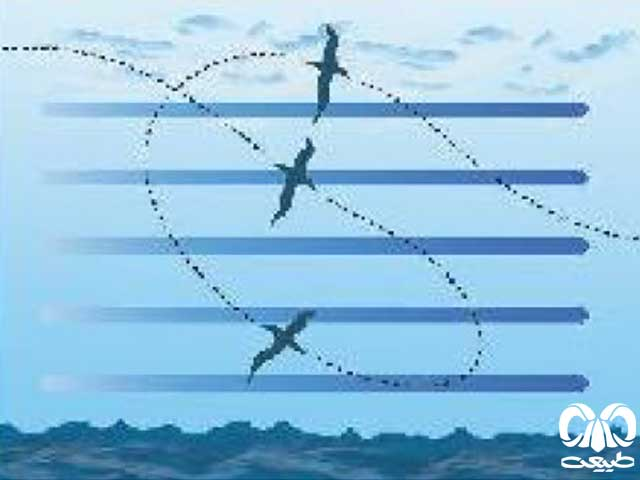 فرم پرواز پرندگان
